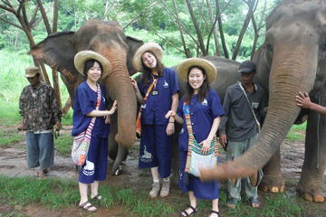Elephant's Heaven: Half-Day Elephant Experience at Baanchang Elephant...