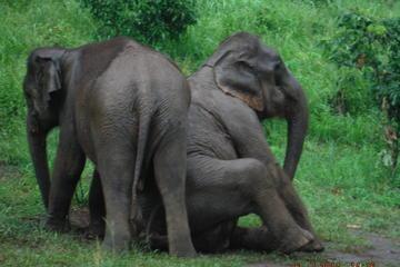 Esperienza con gli elefanti al parco di conservazione degli elefanti