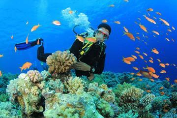 Experiencia de submarinismo para...