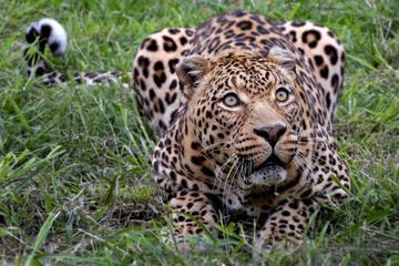 プライベートツアー: ケープタウン発の野生生物サファリ
