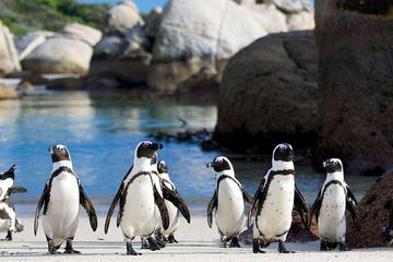 Private Tour: Cape of Good Hope and ...