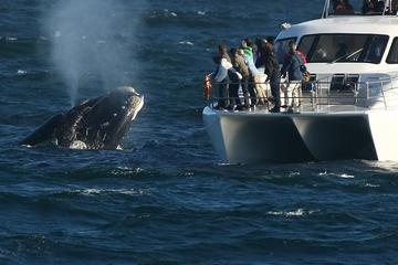 Whale Watching and Hermanus Wine...