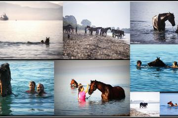 Swim with a Horse in Kalamata