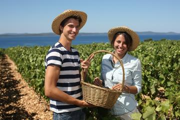 Hinterland of Zadar Small Group Wine Tasting Tour