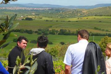 Food and Wine Tour to Sardinian Winery