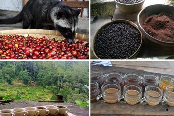 Bali Luwak Coffee Plantation Tour