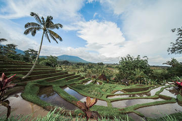 UNESCO Sites: Bedugul, Jatiluwih & Tanah Lot Full Day Tour
