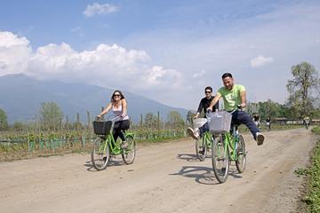 Recorrido en bicicleta y vinícola por Cousiño Macul