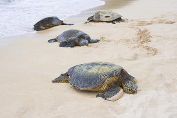Excursão para grupos pequenos para dar a volta na ilha com mergulho...