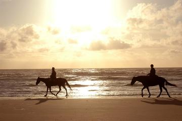 Horseback Beach Rides on Amelia Island