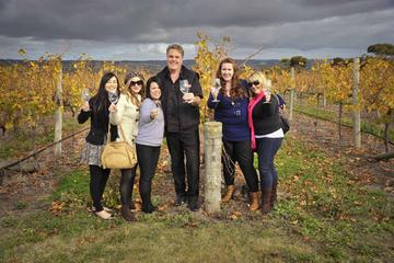 McLaren Vale Winery Small Group Tour from Adelaide Including Wine...