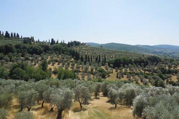 Tour a pie por las colinas de Florencia con picnic por la mañana