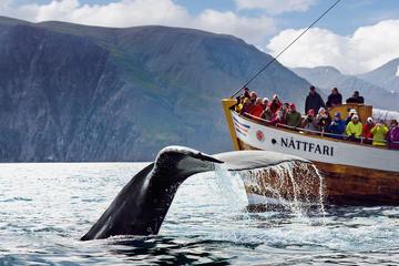 Original-Walbeobachtungstour an Bord eines traditionellen...