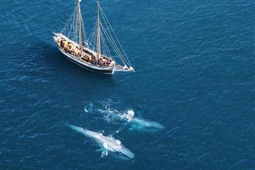 Wale und Papageientaucher beobachten an Bord eines traditionellen...