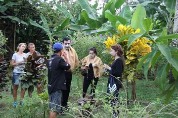 Costa Rica Descens Organic Farm