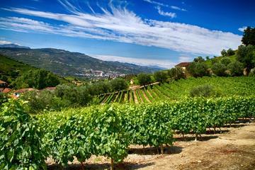 Dans la région nord: dégustation de vins en petit groupe