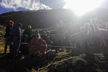 CEREMONY OF THE LAMAS IN THE ANDES OF...