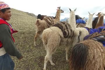 Lama Treck Chinchero Huchuy Qosqo...