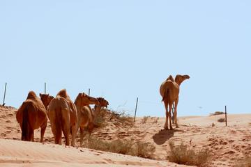 Liwa Oase Wüsten Fahrt von Abu Dhabi