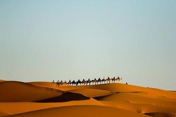 Camel Treks in the Moroccan Desert...