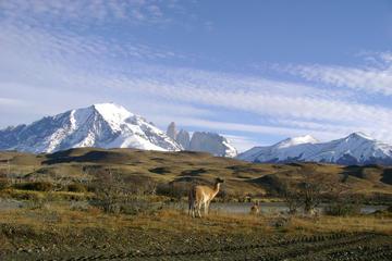 Excursion d'une journée à Torres del Paine au départ de Puerto Natales