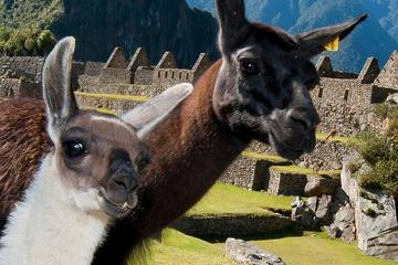 Excursión privada de día completo a Machu Picchu