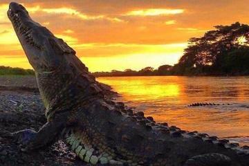 Recorrido por la fauna y flora de Palo Verde desde Tamarindo