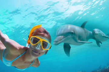 Dolphin Encounter and Snorkeling Combo