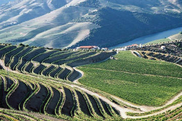 Douro Valley Day Trip with Lunch from Porto