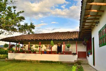 Coffee Tour at La Finca del Café in Santa Rosa del Cabal