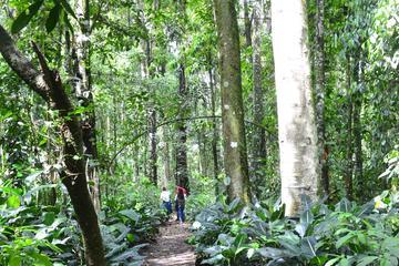 Day Tour to Otun Quimbaya's Flora and Fauna Sanctuary