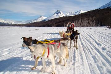 Snow Racket Trekking and Dog Sled Tour in Ushuaia