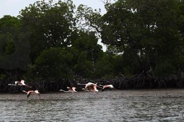 Safari con imbarcazione con fondo in