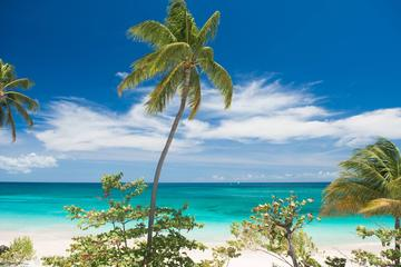 Half-Day Scenic Driving Tour of the Grenada West Coast