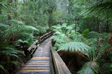 Hastings Caves and Tahune Forest...