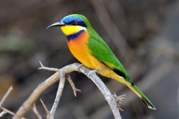 11-Day Bird Watching Tour from Addis...