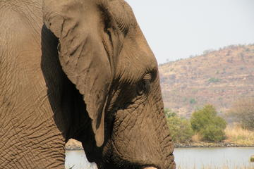 Elephant Sanctuary Tour from Johannesburg