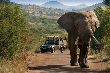 Pilanesberg Safari in Open Vehicle...