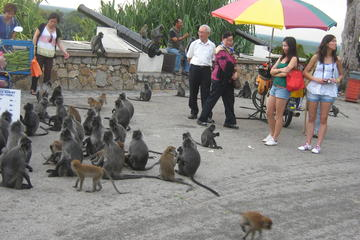 Evening Tour Monkey Feeding and Firefly with Seafood Dinner from Kuala Lumpur