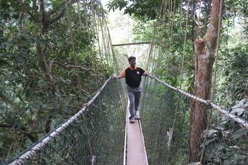 Taman Negara Day Trip from Kuala...