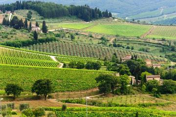 Private Tour: Chianti Region Round Trip Experience from Florence