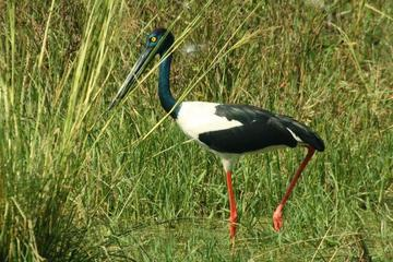 Private Day Trip: Bharatpur and Keoladev Ghana Bird Sanctuary from...
