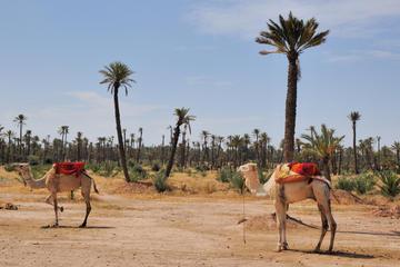 Visite en petit groupe: promenade à dos de chameau à travers la...