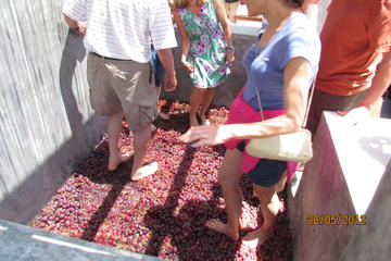 Grape Stomping Experience in Santorini