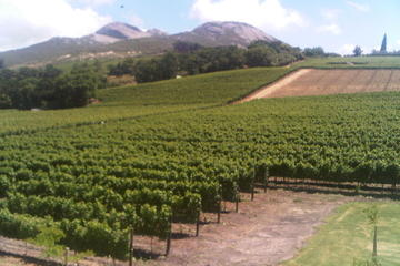Private Tour: The Cape Winelands...