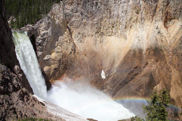 Day Trip Full-Day Yellowstone Wildlife Safari Tour From Jackson Hole near Jackson, Wyoming