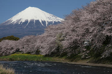 7-Day Private Custom Tour of Tokyo, Mt Fuji, Kyoto and Osaka by...