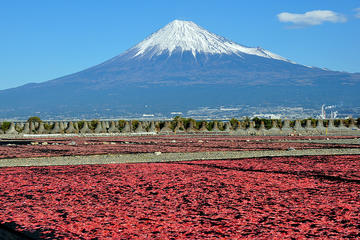 Mt Fuji Private One-Day Tour by...