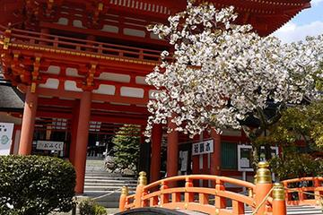 Seasonal Tour: Kyoto Cherry Blossom Viewing Tour by Bus
