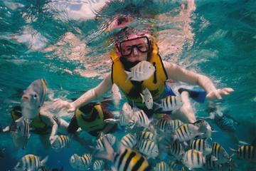 Full-Day Snorkeling Trip to Sharm El Naga from Hurghada